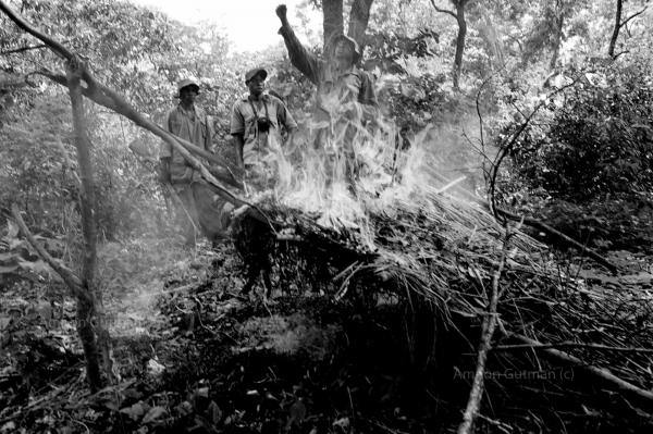 Scouts burning elephants poachers hideout in the bush.