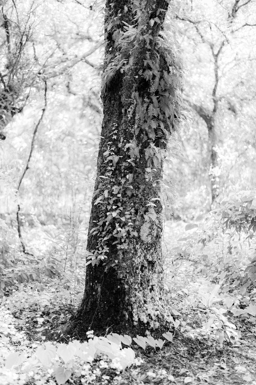 Art and Documentary Photography - Loading TreeTops-JMR_2144-20210702.jpg