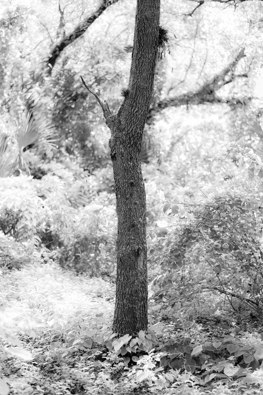 Art and Documentary Photography - Loading TreeTops-JMR_2145-20210702.jpg