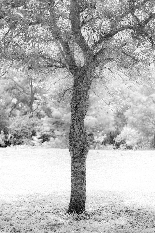 Art and Documentary Photography - Loading TreeTops-JMR_2148-20210702.jpg