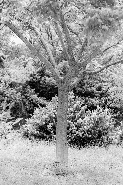 Art and Documentary Photography - Loading TreeTops-JMR_2150-20210702.jpg