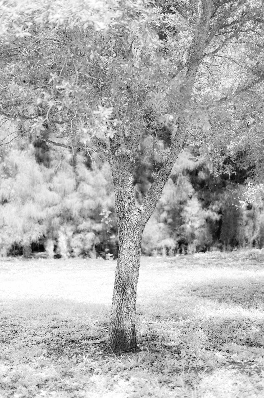 Art and Documentary Photography - Loading TreeTops-JMR_2152-20210702.jpg