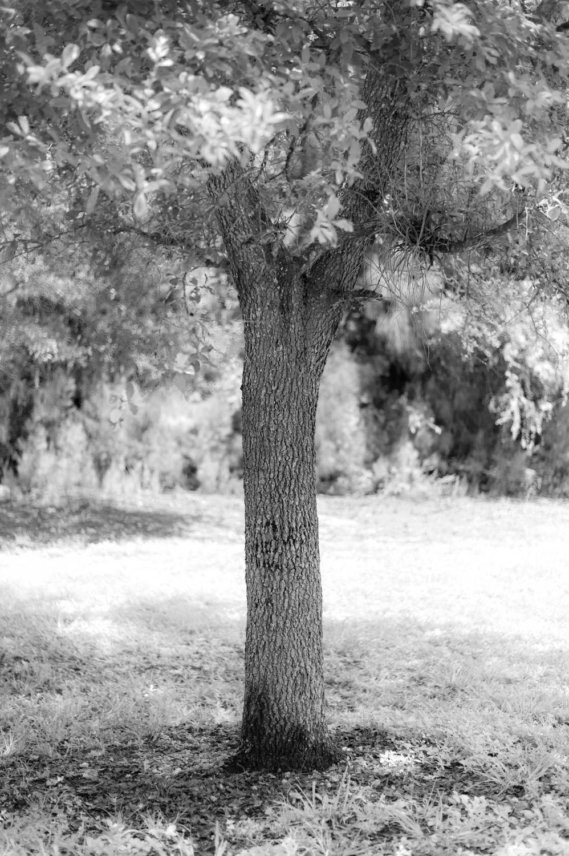 Art and Documentary Photography - Loading TreeTops-JMR_2154-20210702.jpg