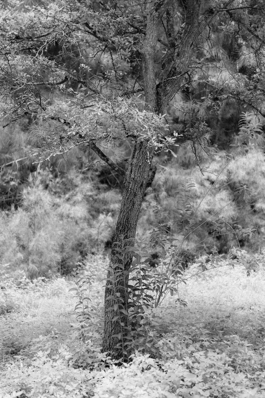 Art and Documentary Photography - Loading TreeTops-JMR_2156-20210702.jpg