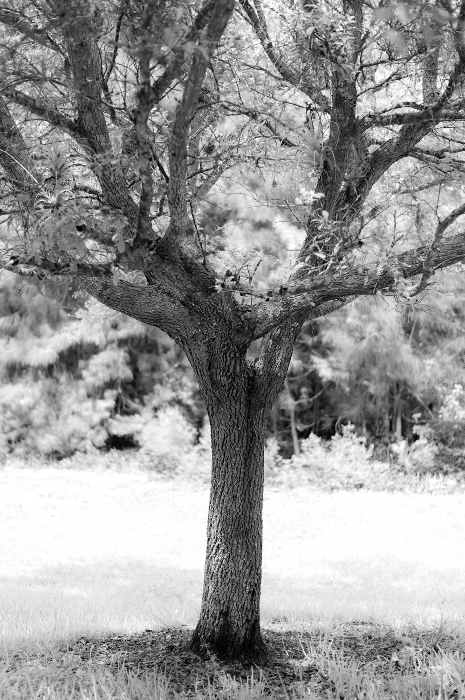 Art and Documentary Photography - Loading TreeTops-JMR_2159-20210702.jpg
