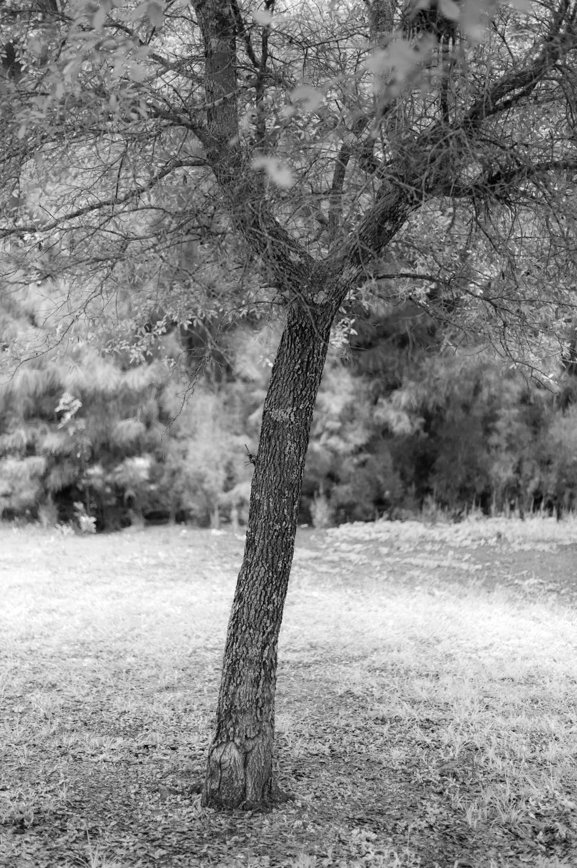 Art and Documentary Photography - Loading TreeTops-JMR_2161-20210702.jpg