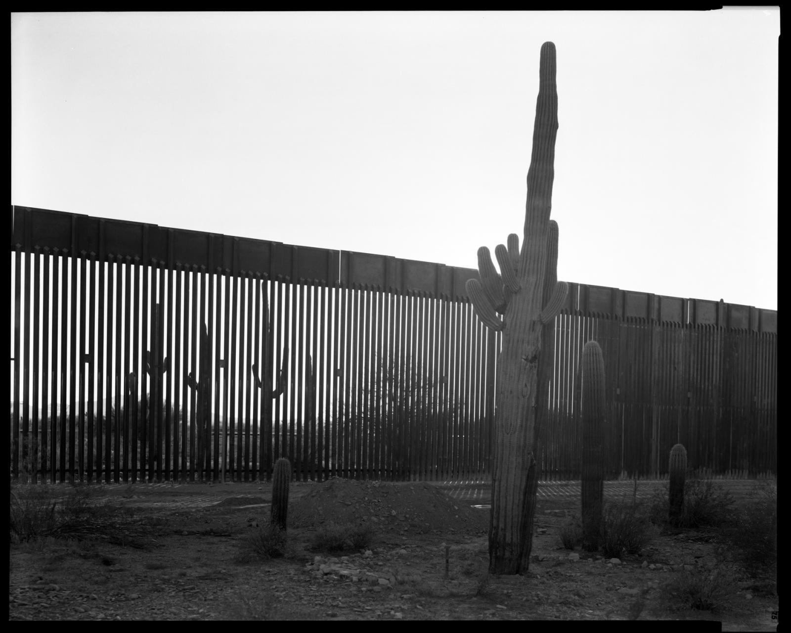Photography image - Loading 01_1572.01.21_Saguaro_Wall.jpg