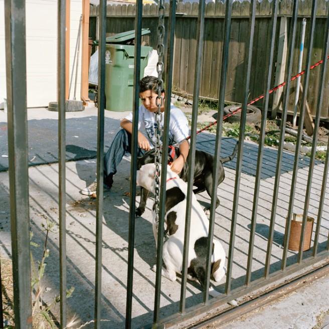 Art and Documentary Photography - Loading Boy_Pitbulls.jpg