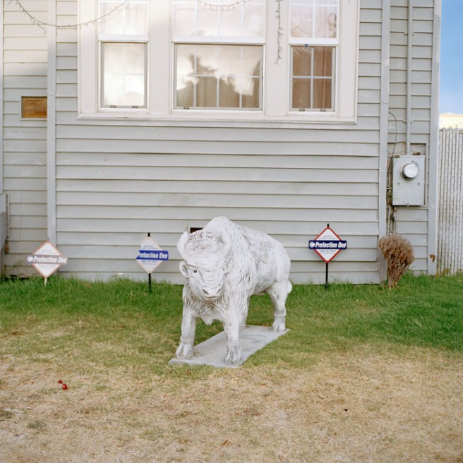Art and Documentary Photography - Loading Bull_Yard copy.jpg