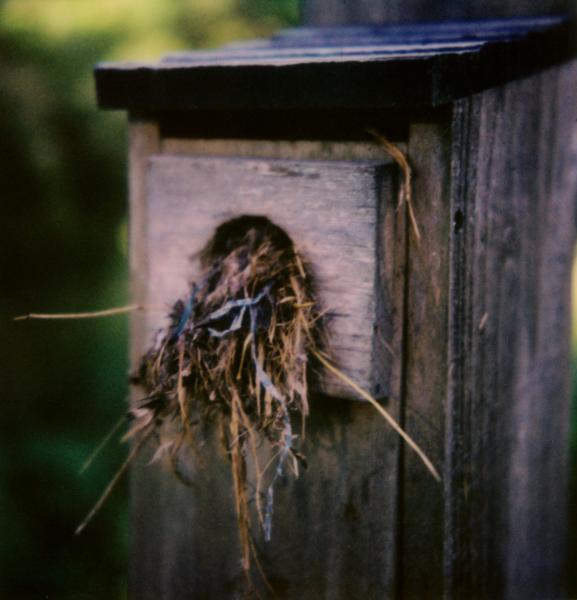 Robbed Nest