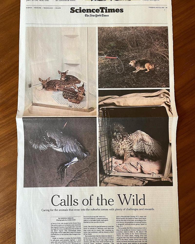 Art and Documentary Photography - Loading NYT_2.jpg