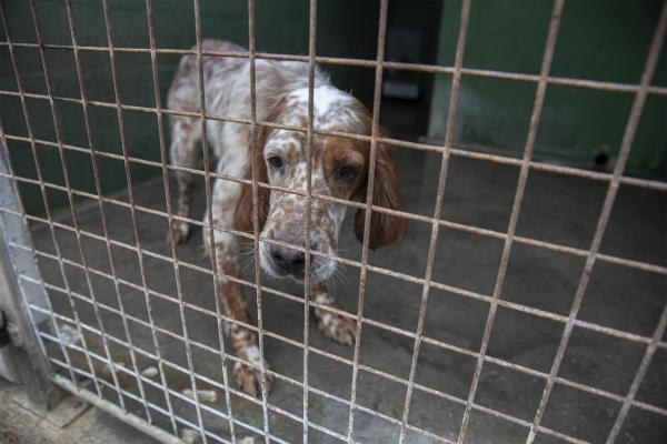 A new life for dogs abused or used by criminals