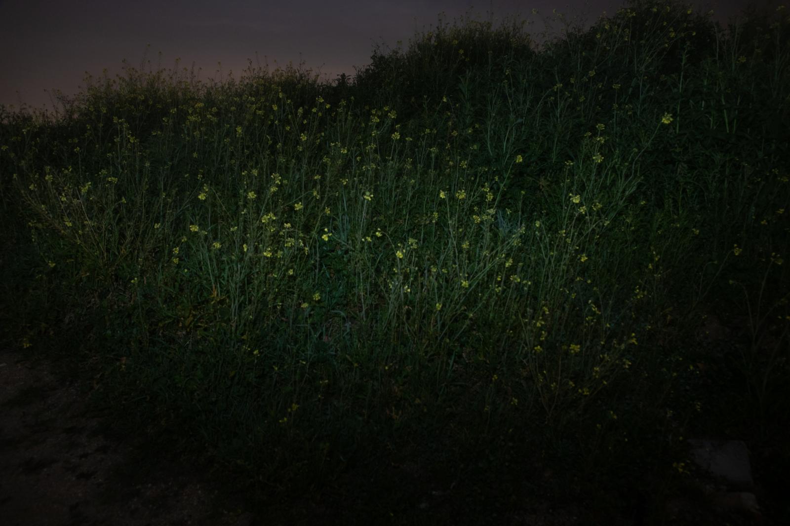 Photography image - Loading Marianne_Matouk--13.jpg