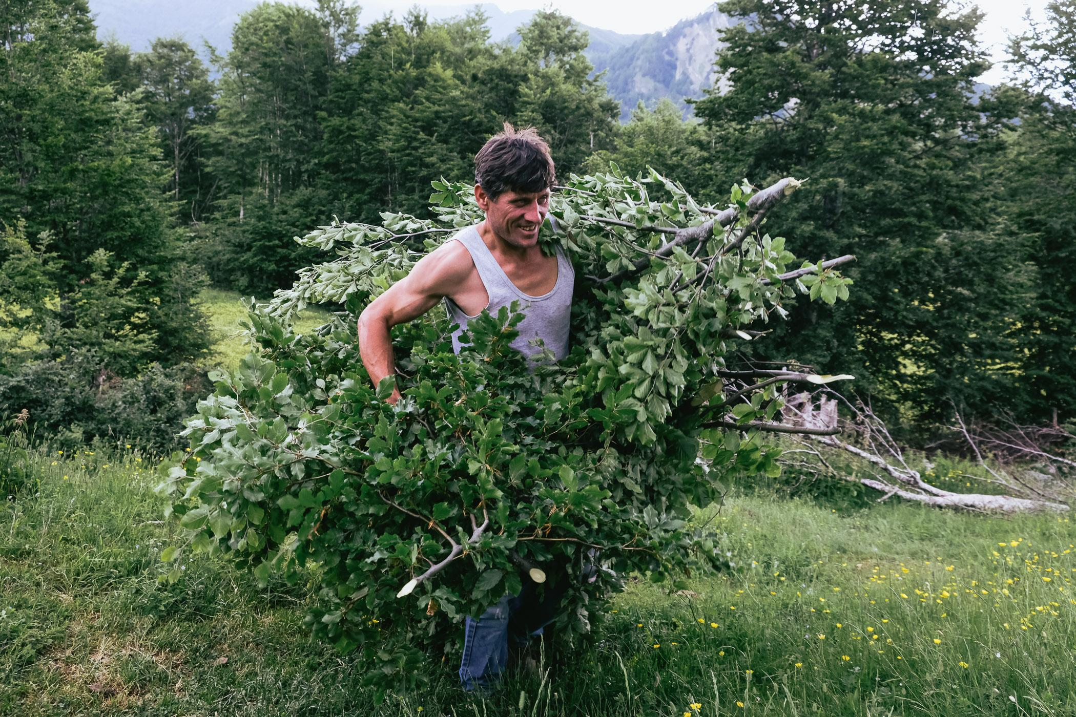 Gazmend Bikaj collects brush from the surrounding forest to construct a roof over a livestock enclosure in Koprisht, Kelmend region, Albania. Gazmend is a shepherd from Kalsa, a hamlet some 30km away, where he lives with his family most of the year. During the summer months they migrate to an encampment in the high pastures of Koprisht, taking a flock of sheep that belong to a farmer from the lowlands.