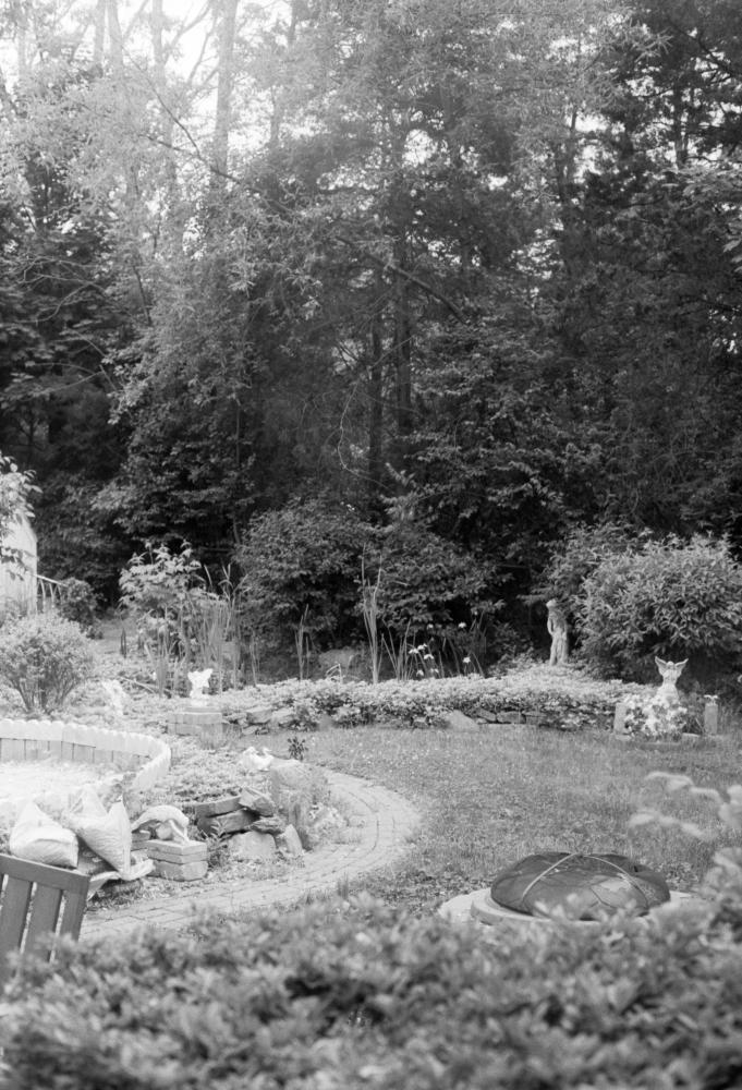 The Backyard. May 2021.