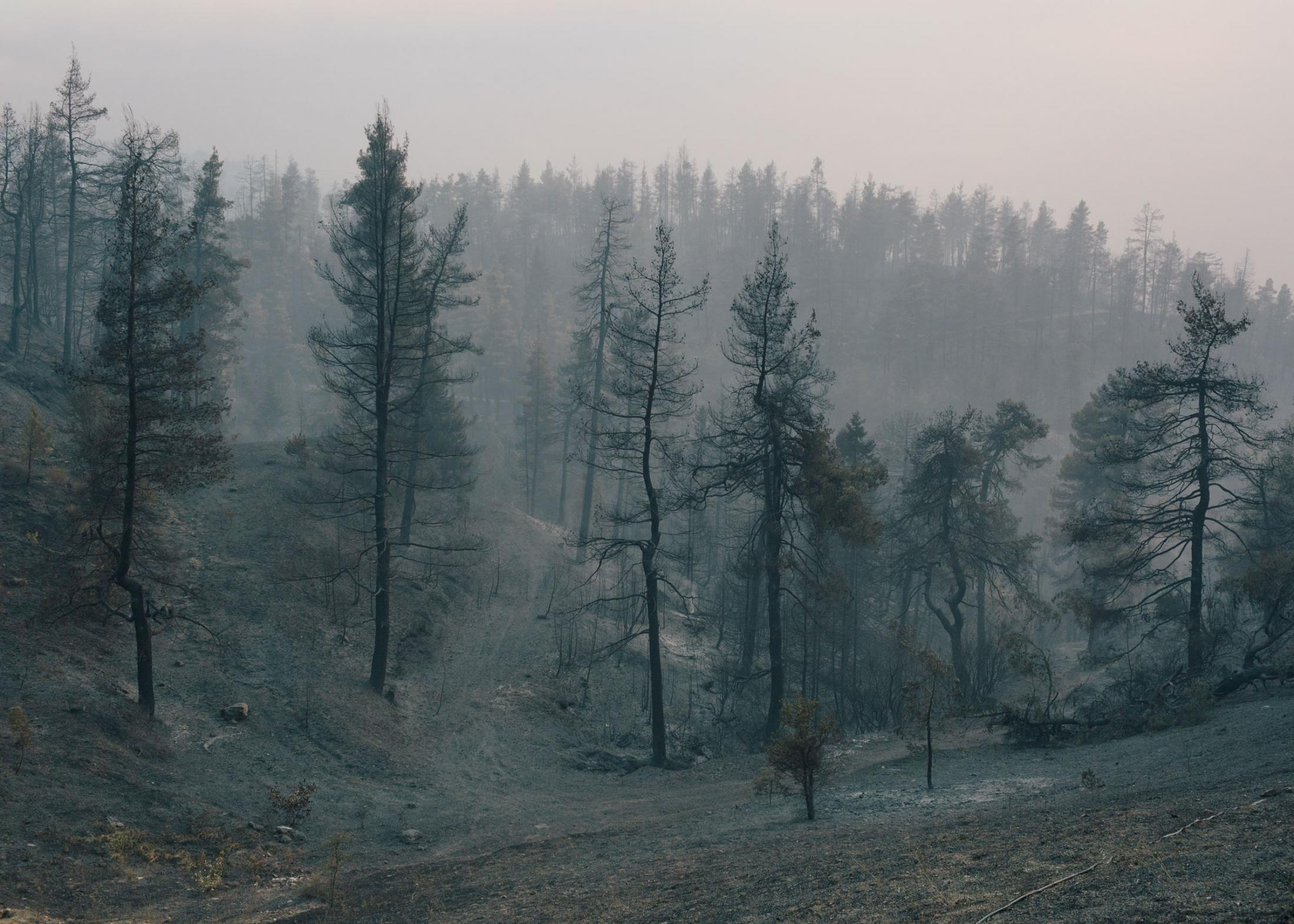 Waldbrände auf der Halbinsel Evia in Griechenland im Sommer 2021