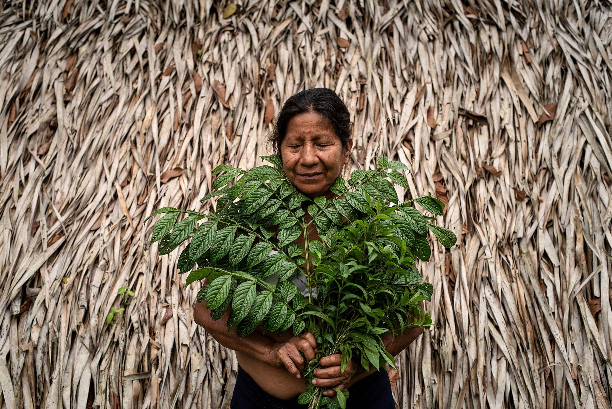 Cecilia Aguinda (62), a kichwa indigenous woman of the Toyuca community, poses for a portrait with the medicinal plants that she used as a natural to heal the wounds on your hands and feet caused by contact with oil. She was fishing in the early morning of April 7. The darkness did not allow her to see the oil in the water. Her fishing net got caught in the river, she and her son suffered several skin injuries while pulling the net out of the water. Cecilia healed her wounds with plants from her garden, she did not have specialized medical attention. Like her, more than 27 thousand affected indigenous people turned to her knowledge to heal their wounds. April 27,2021. Toyuca, Ecuador. Johis Alarcón