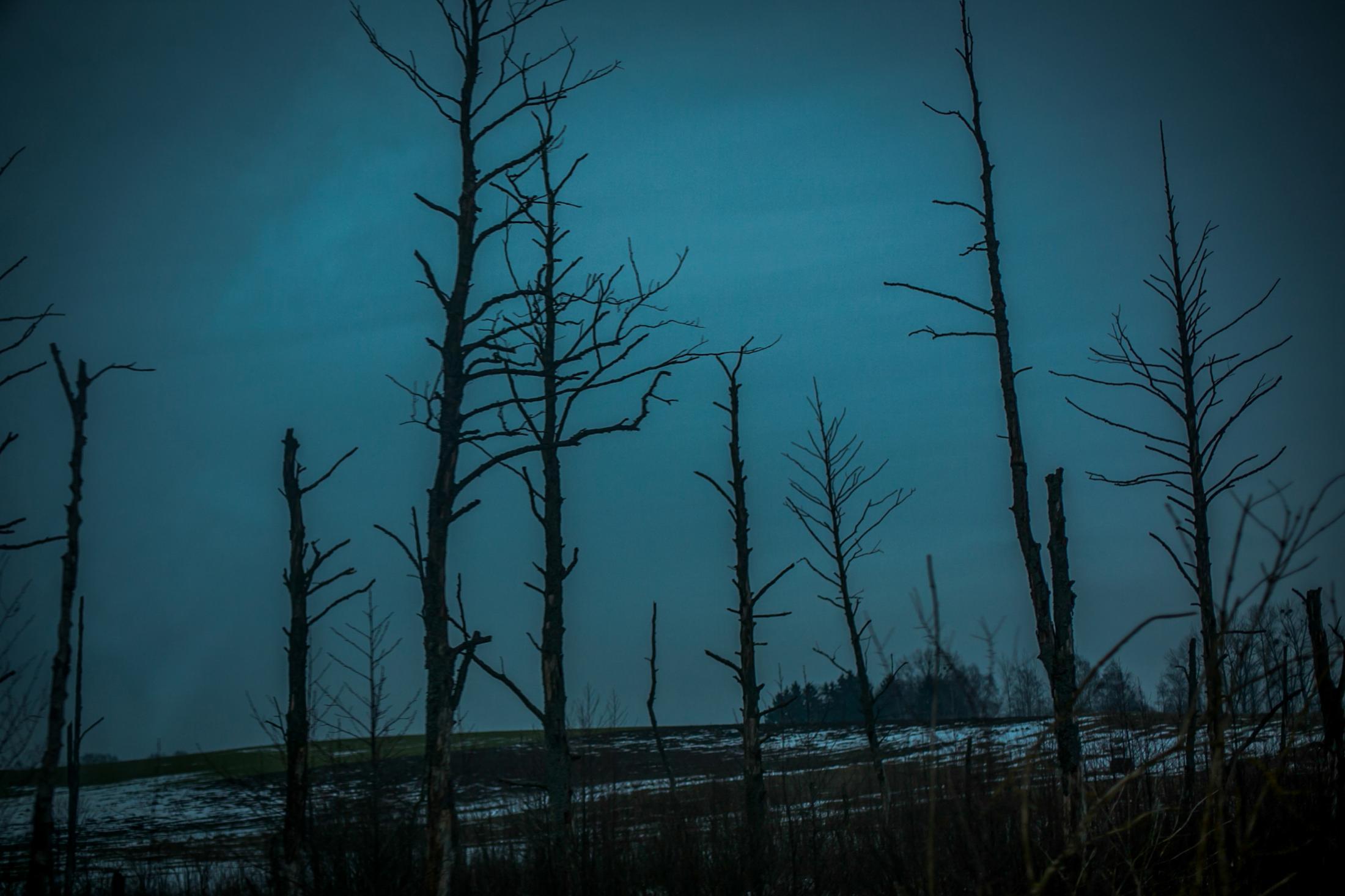 Art and Documentary Photography - Loading ANNA_LIMINOWICZ_negatyw_zamalowane_okna_11.jpg