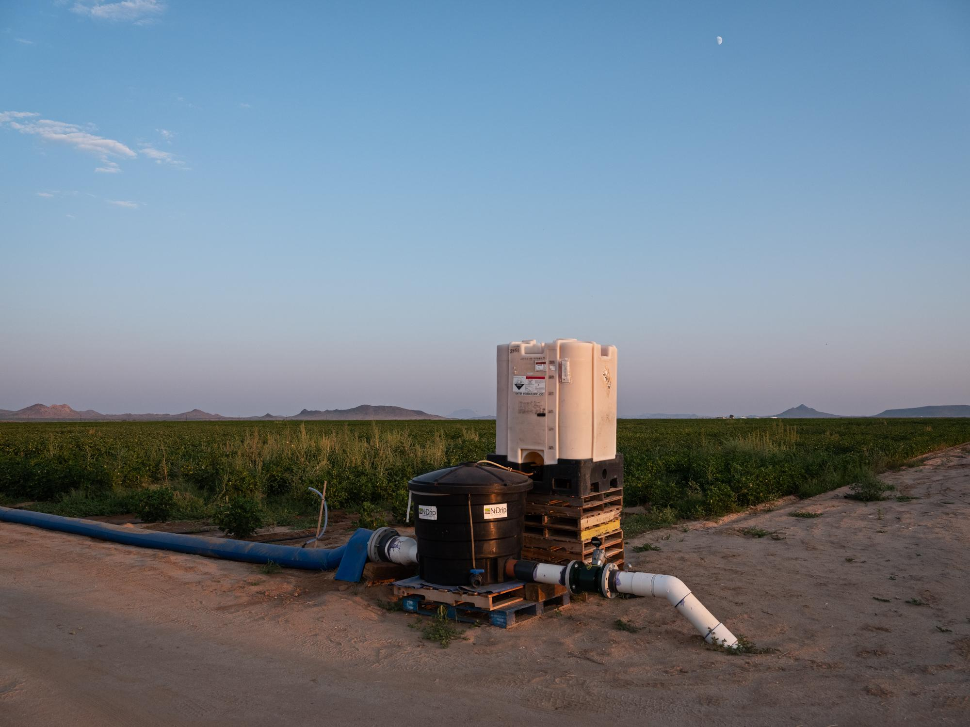 An N-Drip system feeds water into a cotton field.