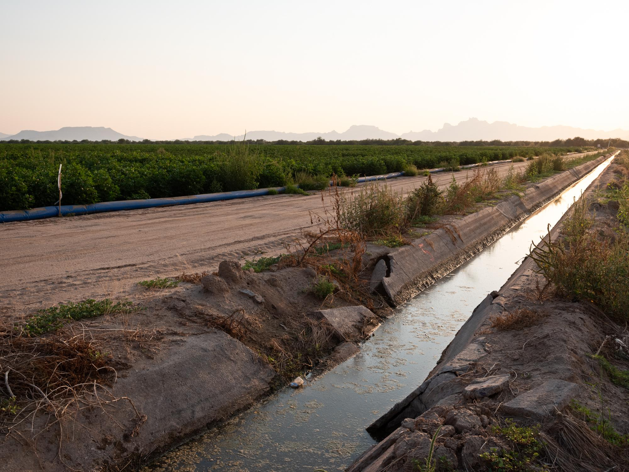 A canal with a flood irrigation system is on the right. For comparison, the cotton field on the left of the road is irrigated with N-Drip system.