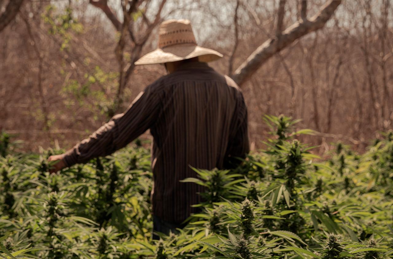 Art and Documentary Photography - Loading cannabis_el_proximo_negocio_maya_averbuch_reportaje_gatopardo_216_portada-1280x845.png