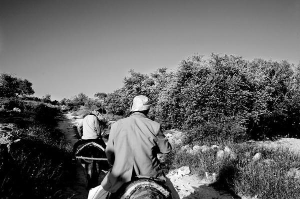 Palestinian farmers heading towards their olive trees field, crossing a reservists patrol on the way, near Jenin.