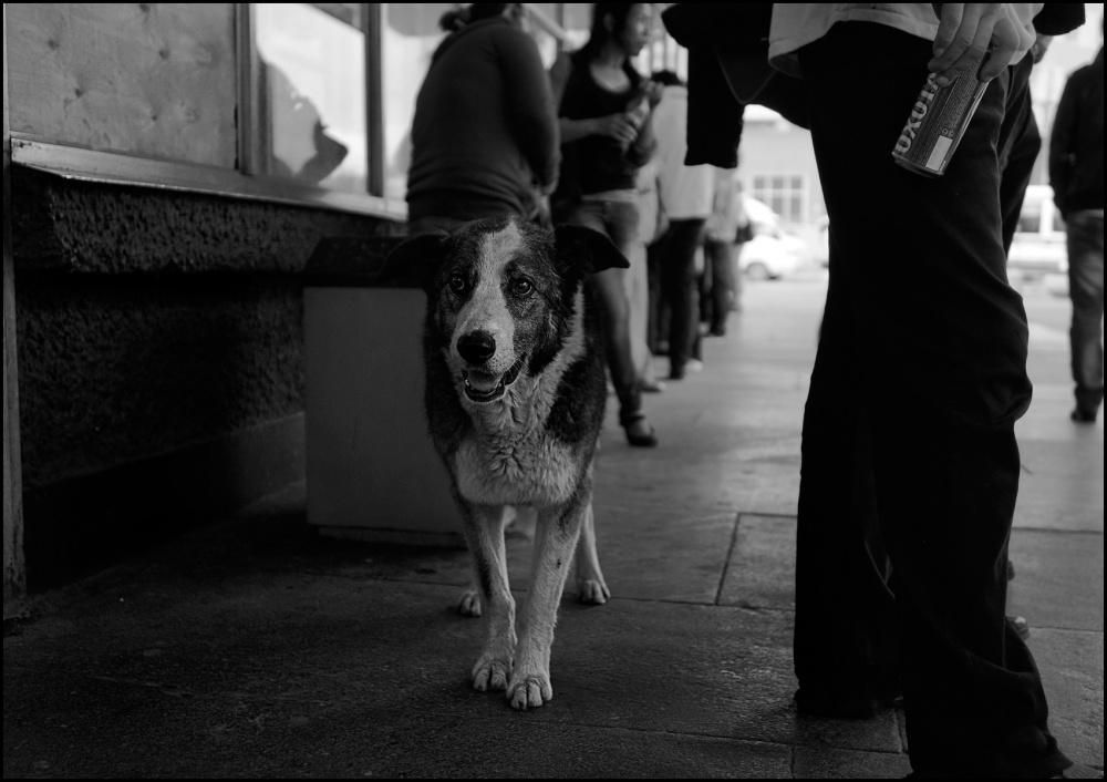 Art and Documentary Photography - Loading 3_DSC4179dog.jpg