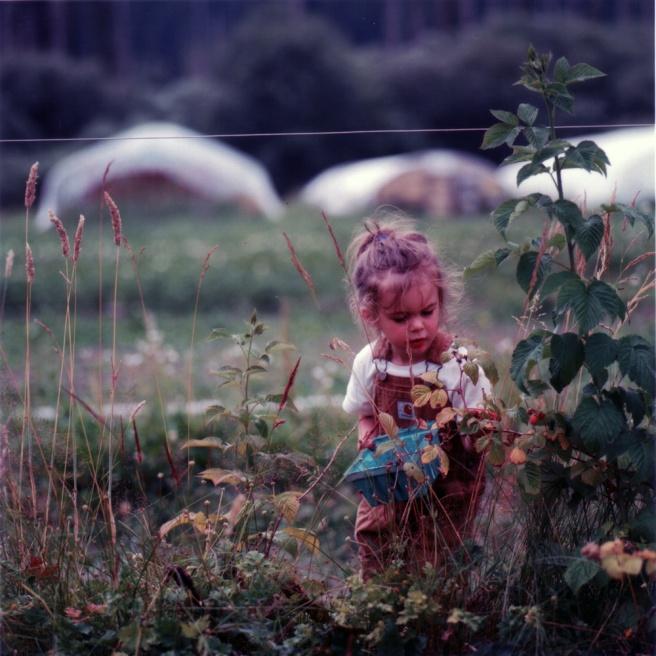 Art and Documentary Photography - Loading 21davidson-raspberries.jpg